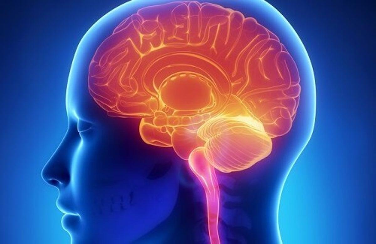 beyin ile ilgili görsel sonucu