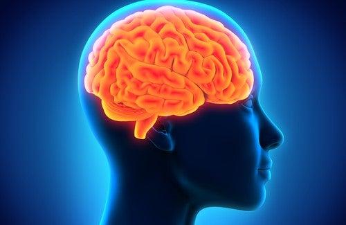 Hafızayı Kuvvetlendirmek İçin Faydalı Besinler