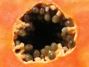 papaya çekirdeği