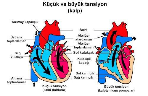 Kalp Hırıltısı Nedir?