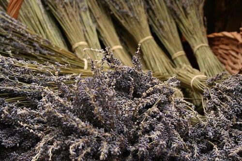 yüksek tansiyonu düşürmek için bitki çayı