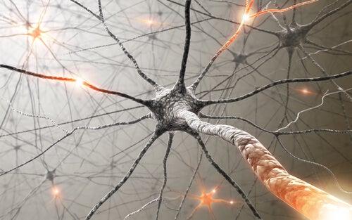 Hafızanıza Yardımcı Olacak Şifalı Bitkiler