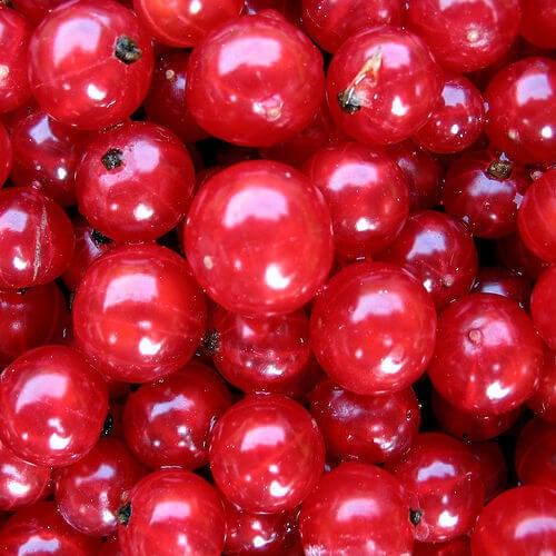 Cranberry tr