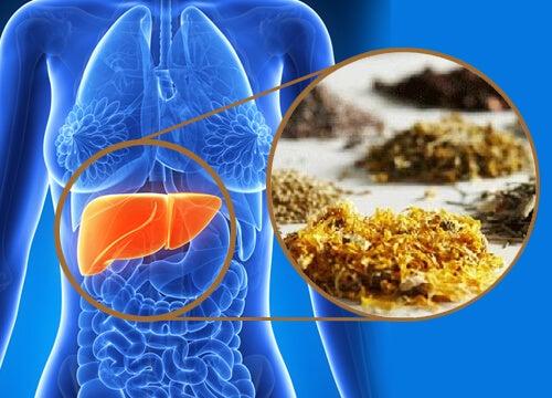 Karaciğeri Temizleyen Şifalı Bitkiler