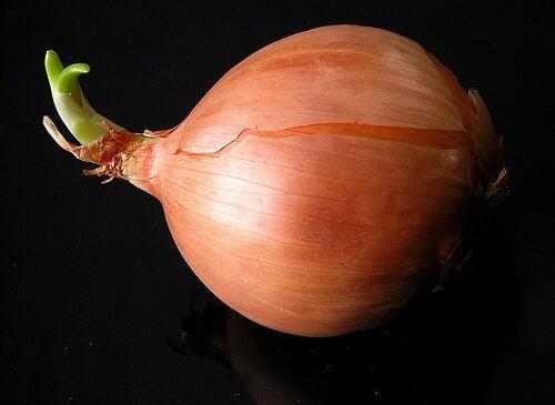 kuru soğan