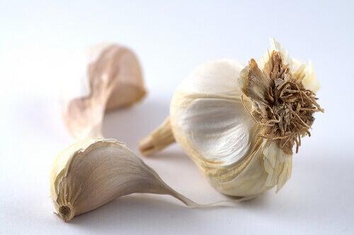 garlic-2 tr