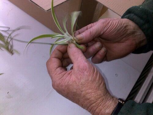 bitki eller tırnaklar