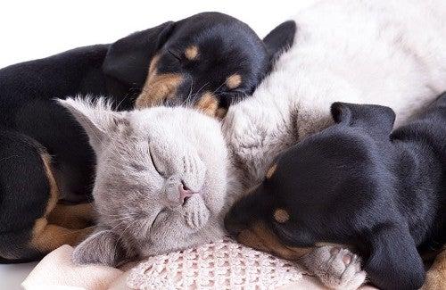 Evcil Hayvanlar Neden Sağlığa Bu Kadar Faydalı?