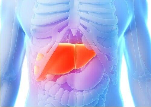 Karaciğeri Temizleyen Yiyecekler Hangileridir?