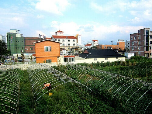 sebze-bahçesi-2