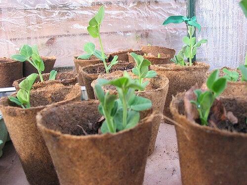 sebze bahçenizi oluşturmak