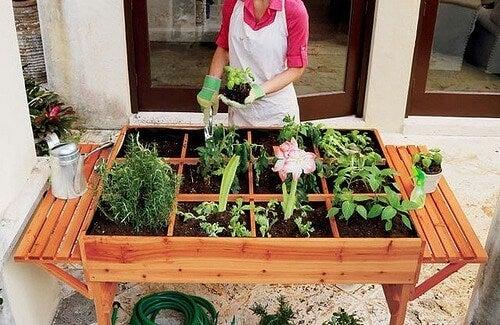 Şehirde Kendi Organik Sebze Bahçenizi Kurmak