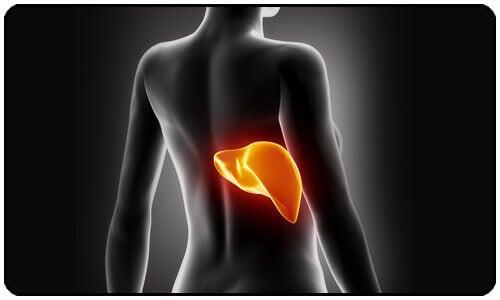 Karaciğerinizin Zehirlendiğini Gösteren 7 İşaret
