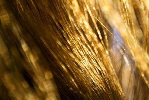 Kuru Saçlar için Mucizeler Yaratan Doğal Bakım Önerileri