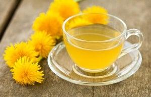 karahindiba çayı ve çiçekleri