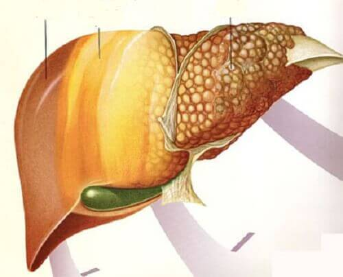 Karaciğer Yağlanması Problemi için Faydalı Meyveler