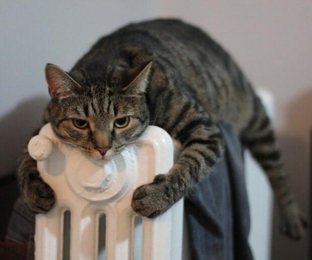 Böbrek hastalıkları sıcaklık