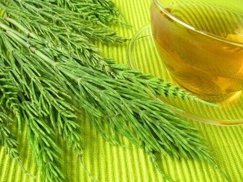 atkuyrugu çayı
