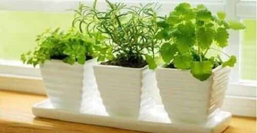 Pozitif Enerji Çeken 10 Bitki