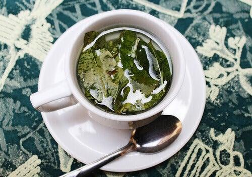 ıtır yaprağı çayı