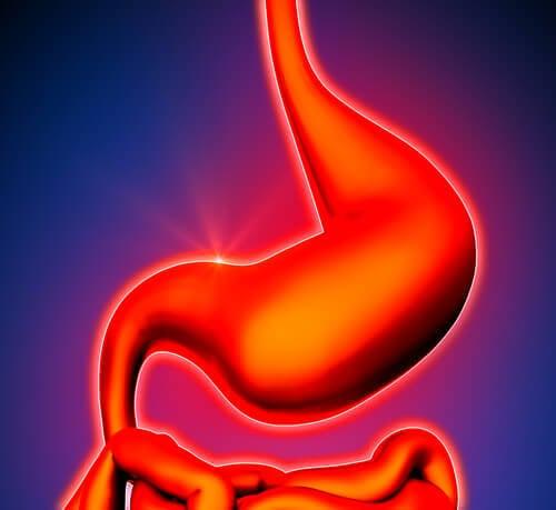 taze zencefil mide sağlığı
