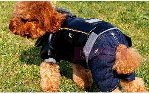 kot giydirilmiş köpek