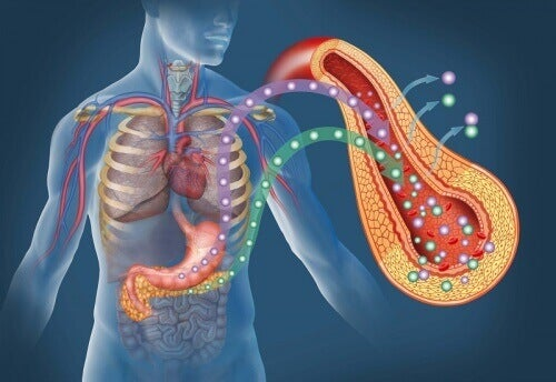 pankreas-diyabet
