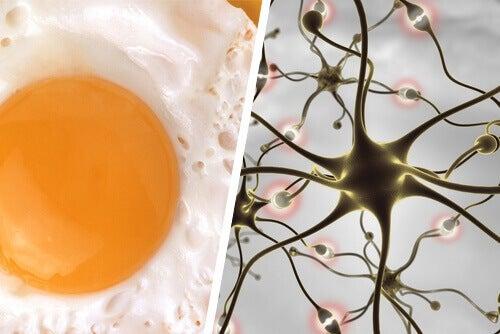 yumurta beyin