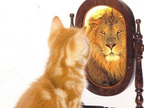 aynaya bakan aslan