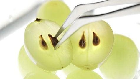 üzüm çekirdeği
