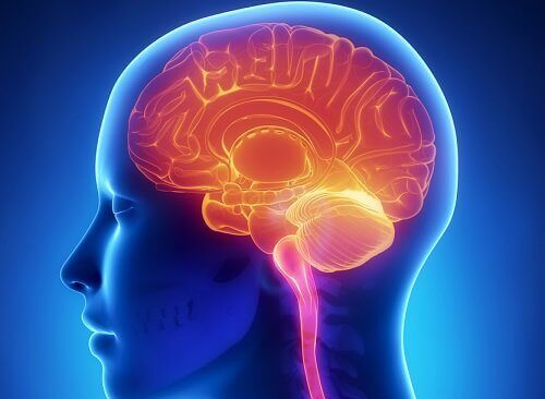 Beyin şeması