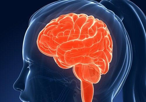 Beyin2