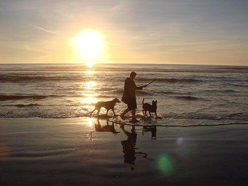 denizde iki köpekle oynayan insan