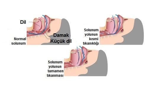 ağzın yapısı