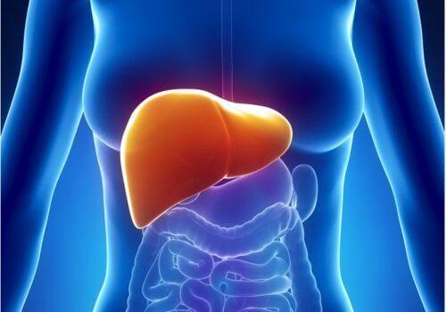 karaciğer temizliği