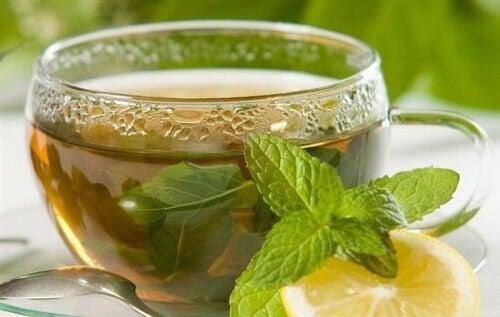 Bitki Çayı Rehberi: Bilmek İstediğiniz Her Şey