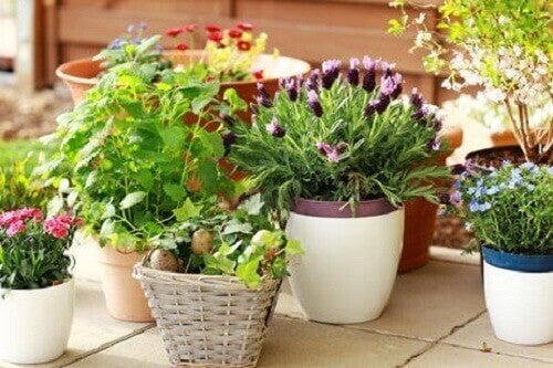 evde bakılan çiçekler
