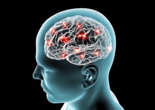 salatalık beyni korur