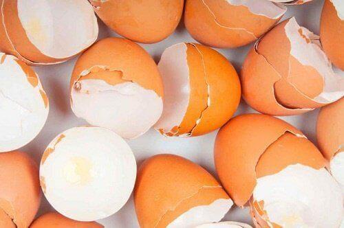 Yumurta Kabuğu ve Şaşırtıcı Kullanımları
