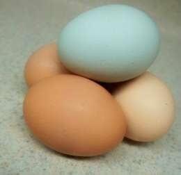 yumurta kabuğu ve ilginç kullanımları