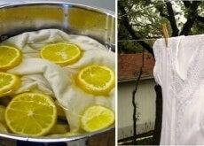 1-limon-ve-çamaşır