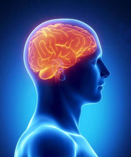 uyku eksikliği ve beyin üzerindeki etkisi