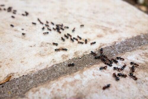 Kimyasal İçermeyen 6 Karınca Kovucu İlaç