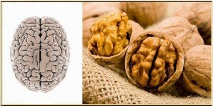 ceviz beyin