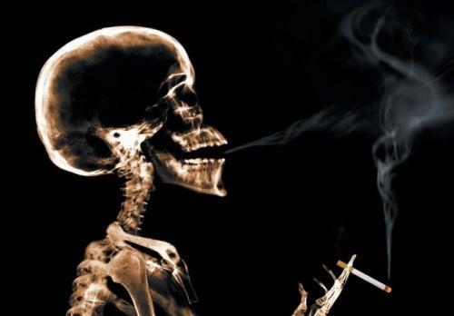 sigara etkisini azaltmak için üzüm çekirdeği yemek