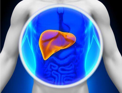 1-karaciğer