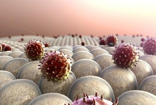bağışıklık sistemini güçlendirmek