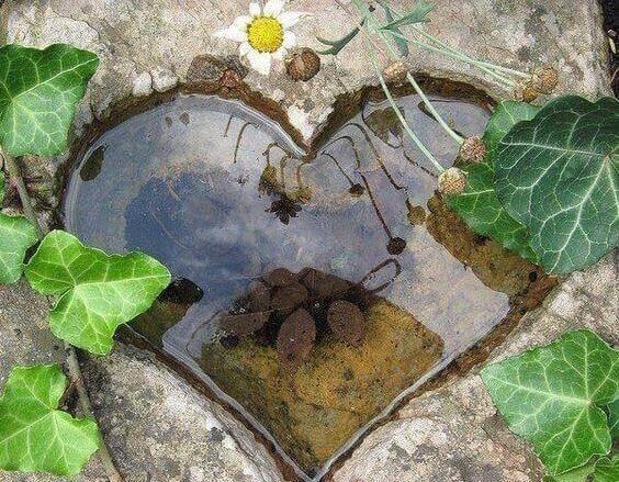 kalp şeklinde su birikintisi ve yapraklar