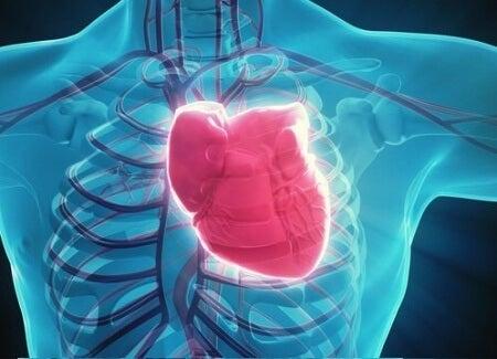 kalp ve iskelet