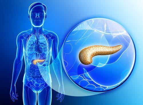pankreas bakımı için tavsiyeler